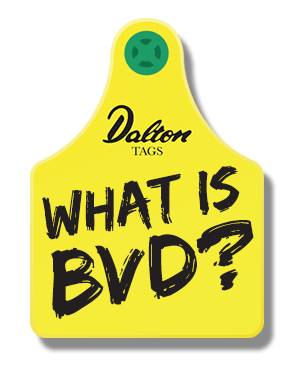 What is BVD Read More